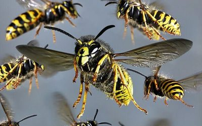 In the Company of Wasps by Carolyn Thompson
