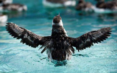Sea Birds to Land; A Dream Years Ago by Carolyn Thompson